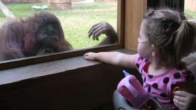 Zoo Friends video