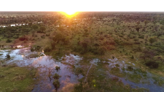 Zoom out aerial sunrise view over palm trees and waterways of the Okavango Delta video
