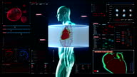 Zooming and scanning heart. Human cardiovascular system, digital display. video