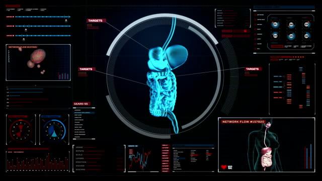 Zooming body scanning internal organs, Digestion system in digital display. video