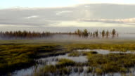 zooming video mist at sunrise over the marsh in the Siberian taiga, the Yamal Peninsula video