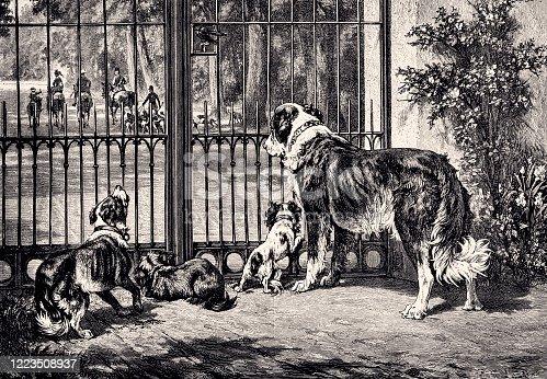 istock THE DOG FAMILY (XXXL) 1223508937