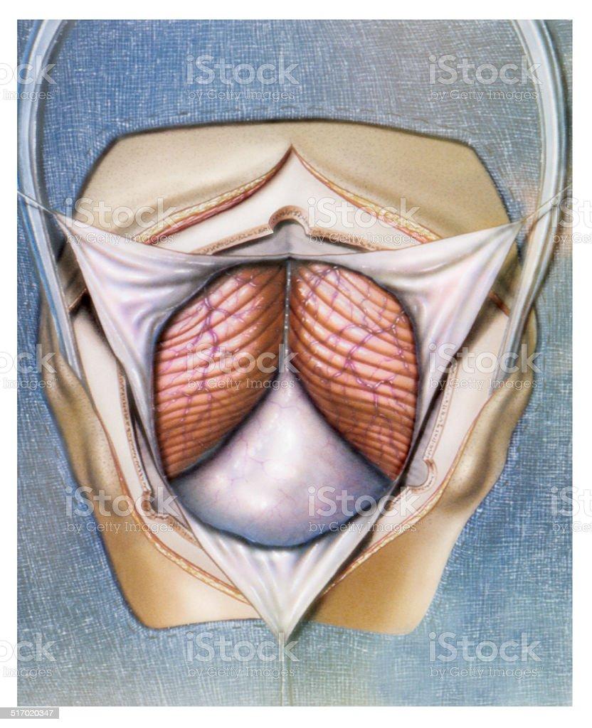 CD17-00578 vector art illustration