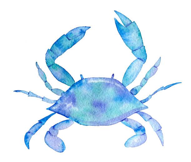 stockillustraties, clipart, cartoons en iconen met нарисованный вручную на белом фоне краб - blauwe zwemkrab