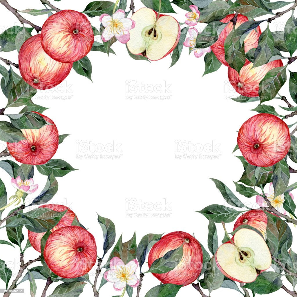 Нарисованная вручную акварелью рамка с яблоками, цветами и листьями vector art illustration