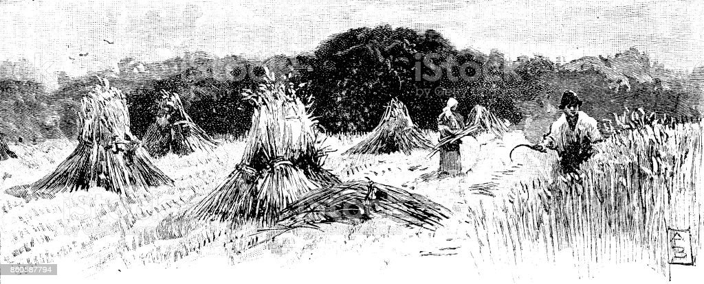 19th century article illustration depicts a typical English countryside scene at harvest time; Victorian farming and gathering in crops 1893 vector art illustration