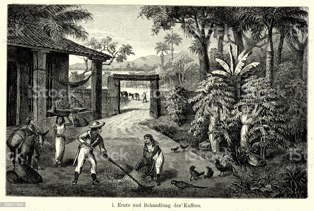 19th Century Brazil - Coffee plantation vector art illustration
