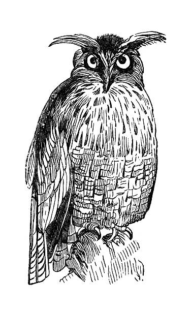 19th century engraving of a great eagle owl - great horned owl stock illustrations, clip art, cartoons, & icons