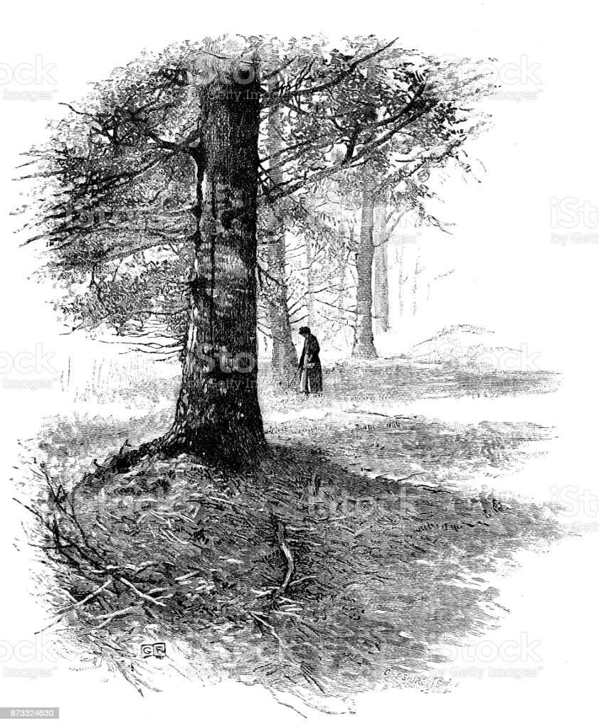 19th century engraving of a lady wandering through woods in the springtime; Victorian country scenes in spring  1890 vector art illustration