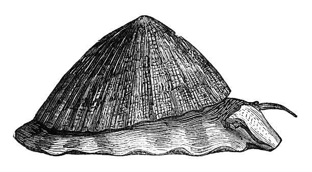 ilustrações de stock, clip art, desenhos animados e ícones de século xix gravação da lapa - lapa