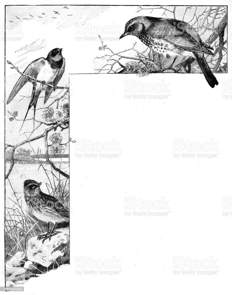 19 Jahrhundert Gravur Eine Doppelseitige Zweiseitigen Dekorative ...