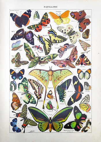 19th Century Illustration About Butterflies Stock Illustration - Download Image Now