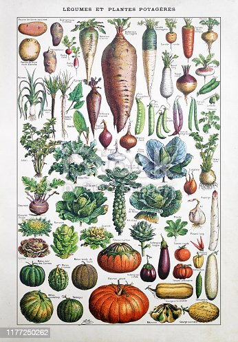 Old illustration about garden vegetables by Adolphe Philippe Millot printed in the french dictionary