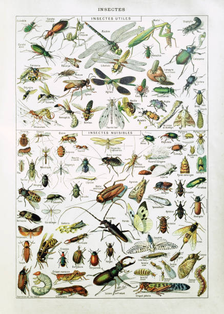 19th century illustration about insects vector art illustration