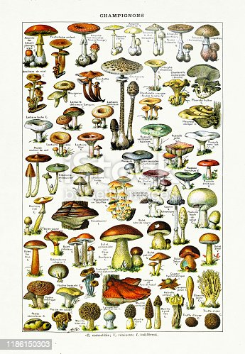 19th century illustration about Mushrooms