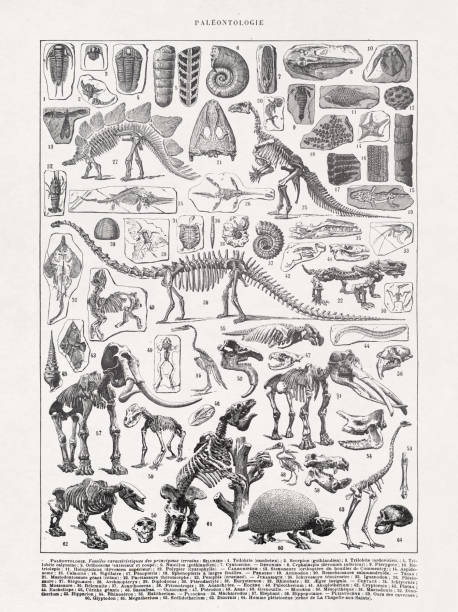19th century illustration Paleontology vector art illustration