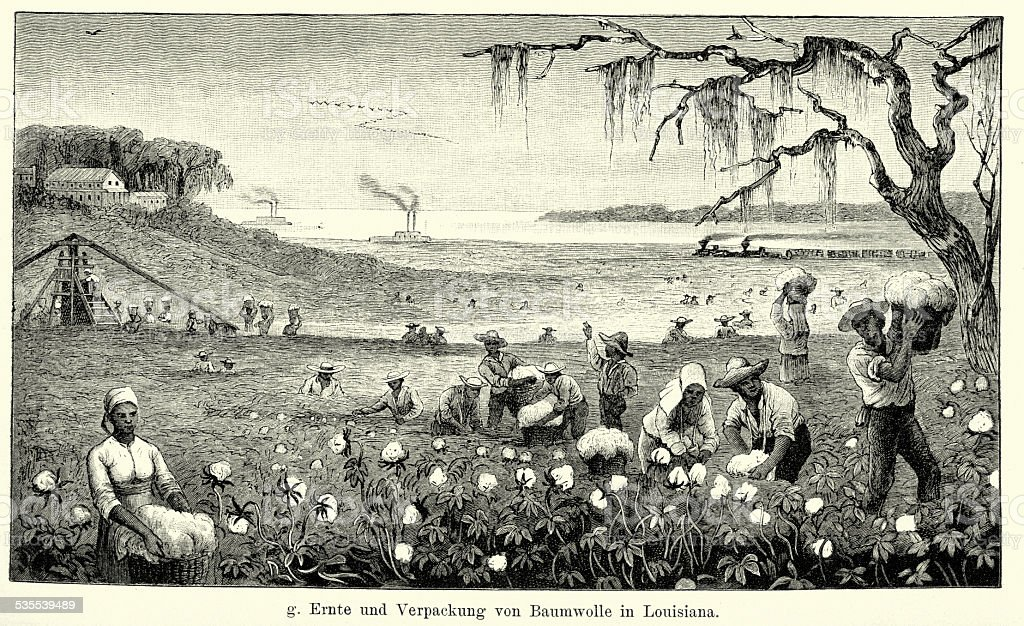 19th Century North America -  Harvesting cotton in Louisiana vector art illustration