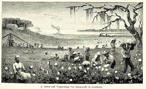 19th century north america -  harvesting cotton in louisiana - cotton stock illustrations, clip art, cartoons, & icons