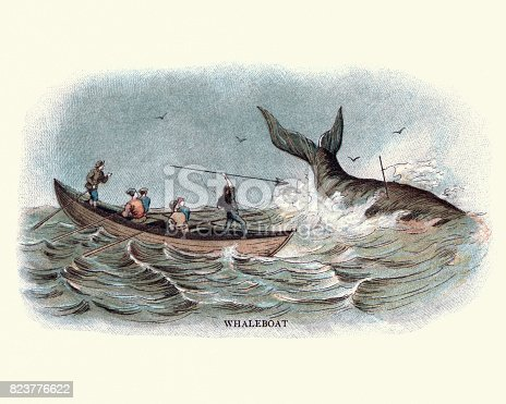 Vintage engraving of 19th century whalers harpooning a whale from a whaleboat