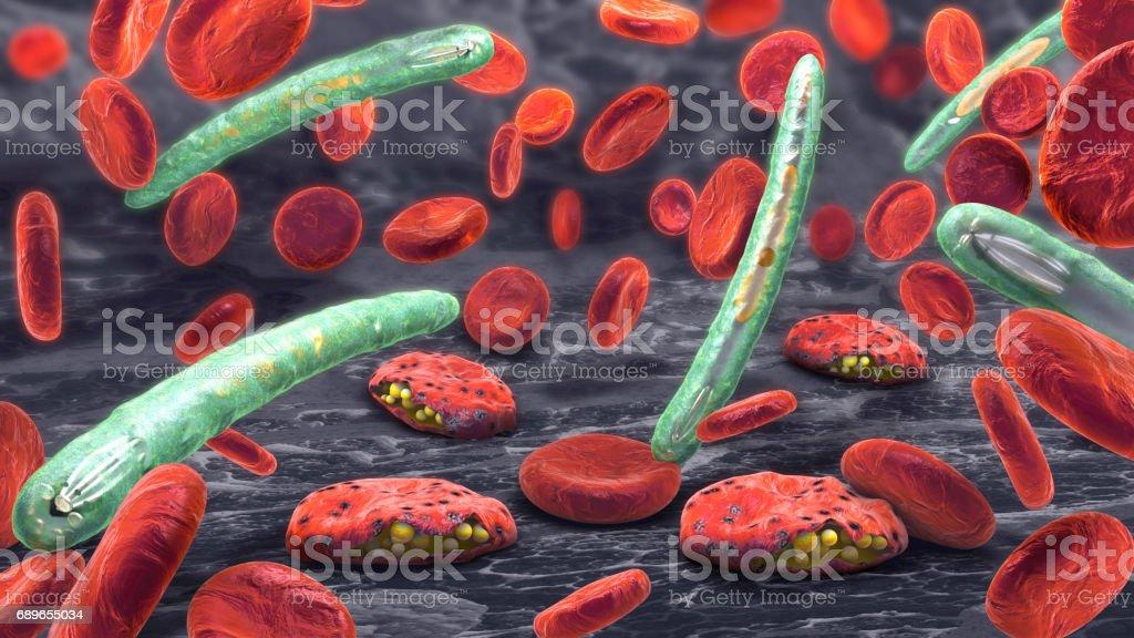 3D Abbildung Blutkörperchen, Plasmodium Malaria Krankheit verursacht – Vektorgrafik