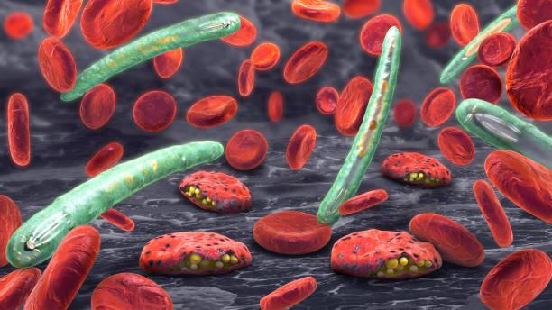 képek a malária plazmodiumról