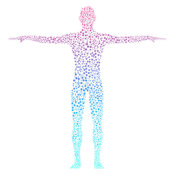 Abstract human body with molecules DNA Abstract human body with molecules DNA illustration the human body stock illustrations