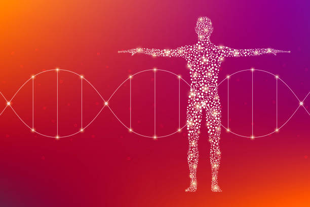 Abstract human body with molecules DNA. Medicine, science and technology concept. Illustration vector art illustration