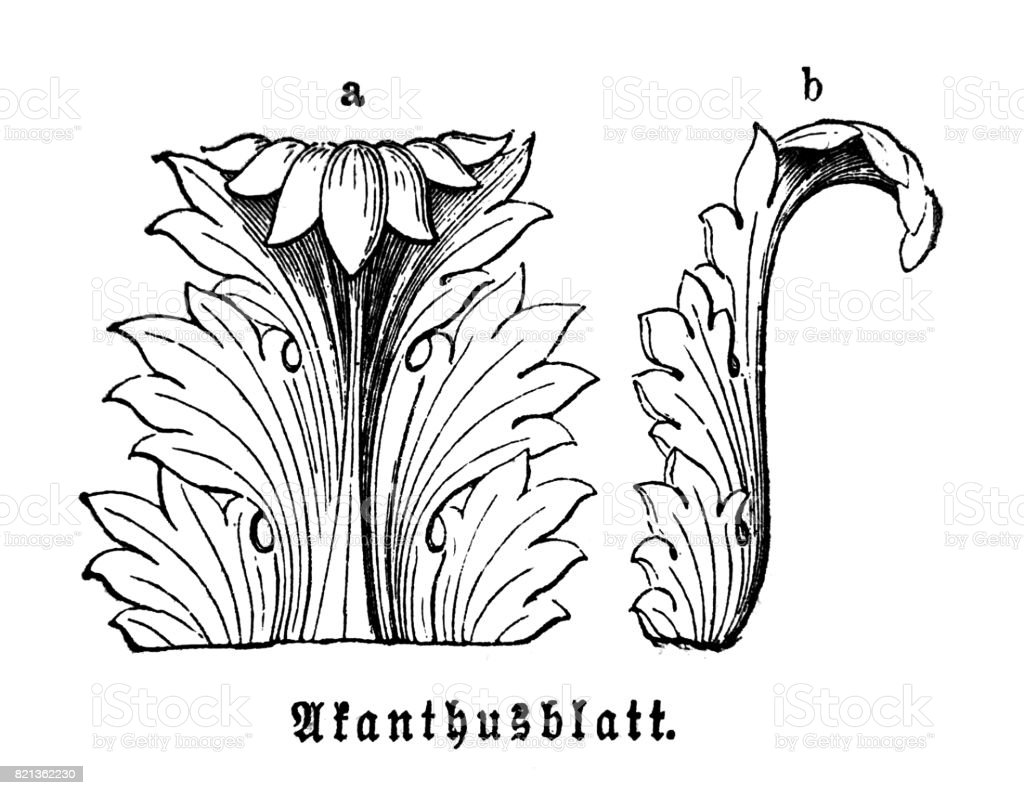 Acanthus leaf  -  Ancient ornament technique of decorating vector art illustration