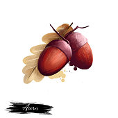 istock Acorn isolated on white background. Hand drawn illustration of oak nut with leaf realistic image. Organic healthy food. Digital art with paint splashes. Graphic clip art for design, web and print 1223170985