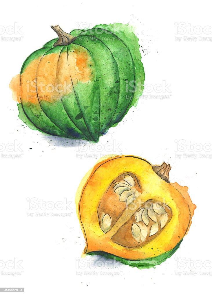 Acorn Squash Painted in Watercolor vector art illustration