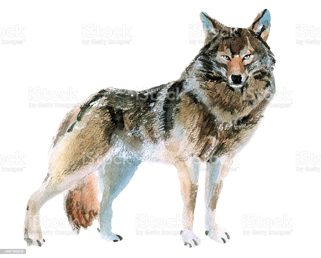 Acrylic painting of a wolf starring at the viewer vector art illustration