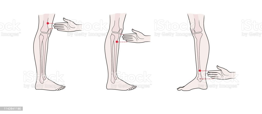 Active Acupuncture Points On The Legs Stock Illustration
