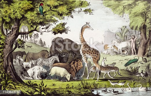 Vintage image depicts a scene from the Bible where Adam names all the animals in the Garden of Eden.