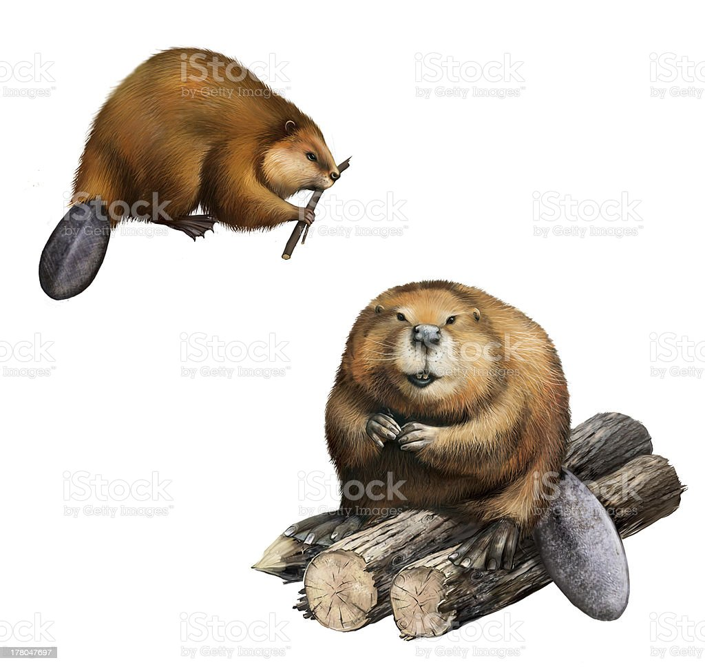Adult Beaver sitting at logs.  Isolated Illustration on white background. royalty-free stock vector art