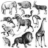 Africa Wildlife Fauna Illustrations | Vintage Animal Clipart