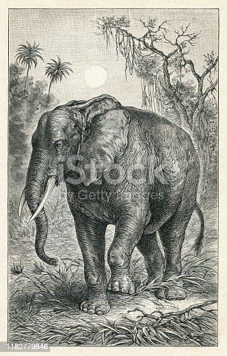 African elephant illustration Original edition from my own archives Source :