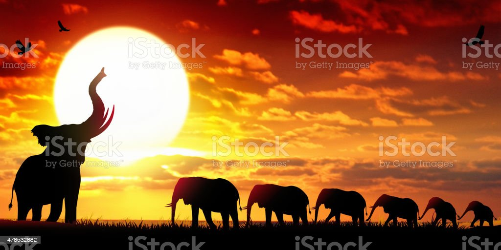 African Elephants at the sunset wildlife scenery African Elephants at the sunset wildlife scenery. The large family of Elephants are walking in line in savanna. 2015 stock illustration