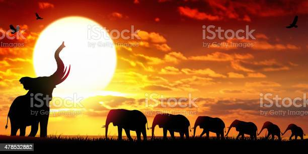 African Elephants At The Sunset Wildlife Scenery Stock Illustration - Download Image Now