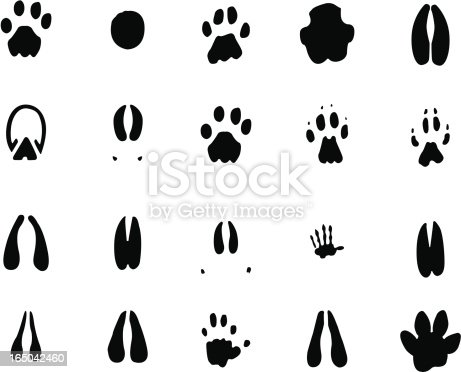 Footprints of various animals found on the plains of Africa.