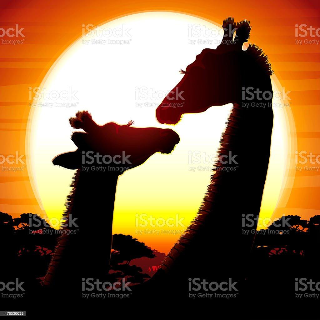 African Giraffes at the sunset vector art illustration