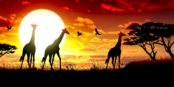 African Giraffes silhouettes safari against hot sun