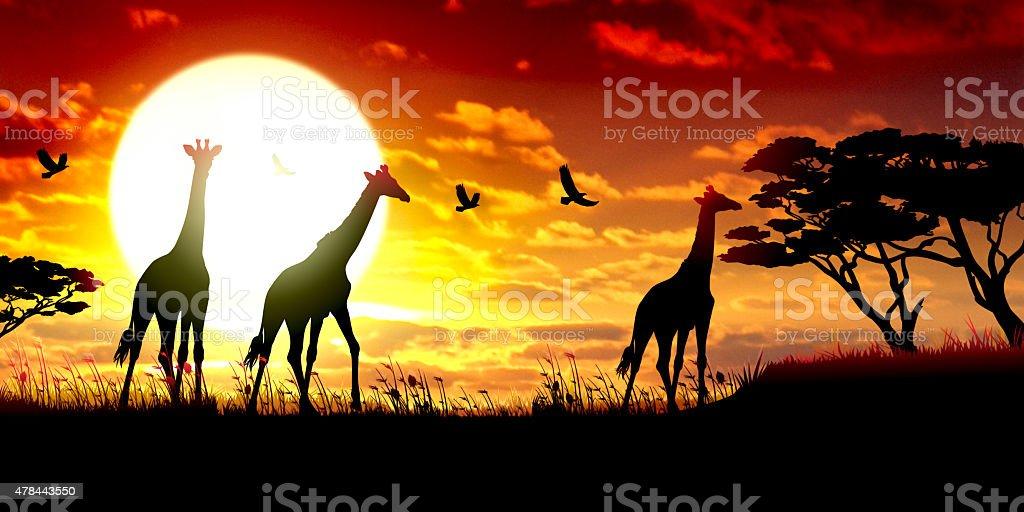 African Giraffes silhouettes safari against hot sun vector art illustration