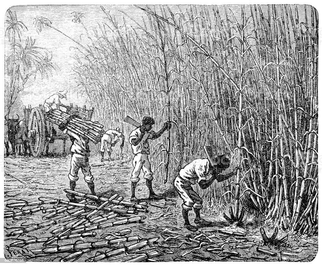 African slaves processing sugar cane vector art illustration