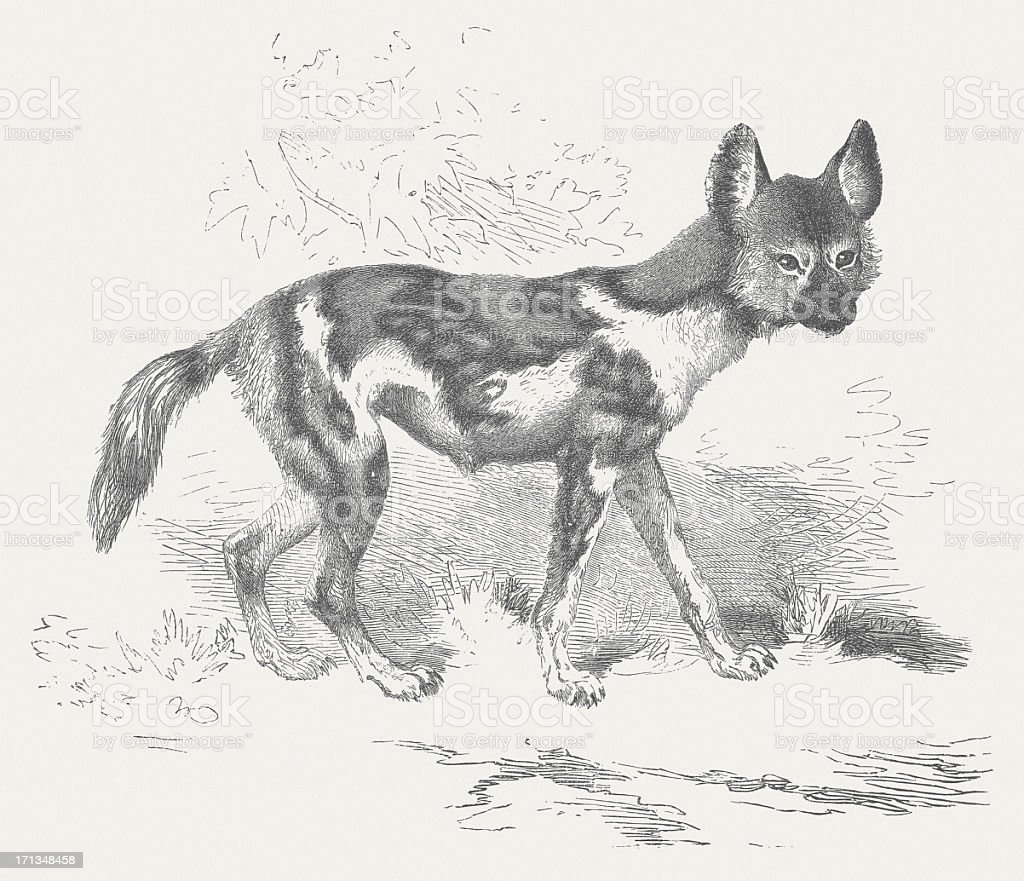 African wild dog (Lycaon pictus), wood engraving, published in 1875 royalty-free stock vector art