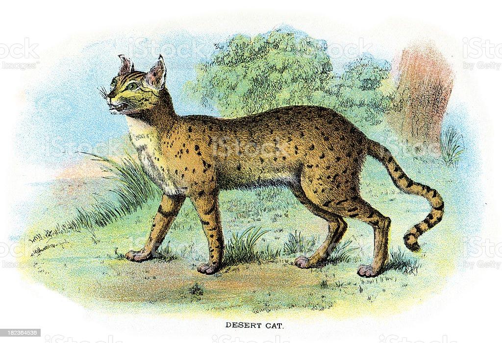 African wildcat (Felis silvestris lybica) royalty-free african wildcat stock vector art & more images of 19th century