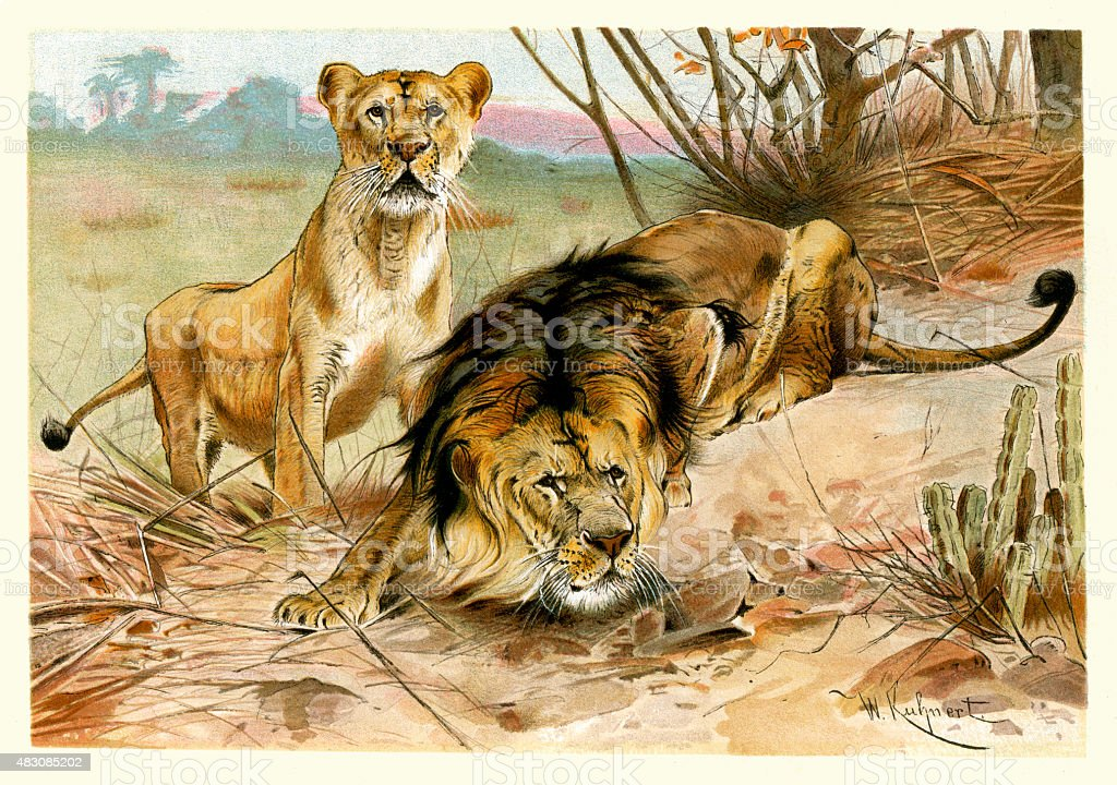 African Wildlife - Lion and Lioness vector art illustration