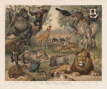 African wildlife, lithograph, published in 1897