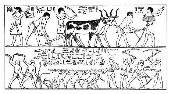 Agriculture in the ancient Egypt. Ancient Menfi, Saqqara Necropolis Mastaba of Ti, Old Kingdom, Dynasty V, ca. 2400 BC
