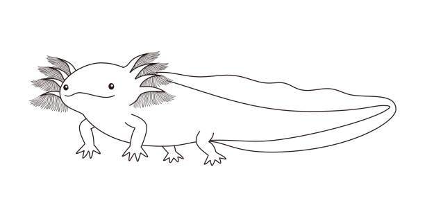 アホロートル ウーパールーパー キャラクター 塗り絵 イラストレーション ベクターアートイラスト