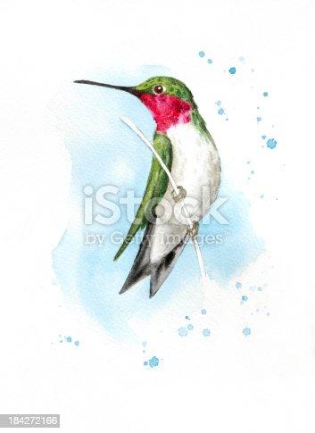 Alert Perched Hummingbird